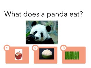 Pandas!!! by Sophie Wang