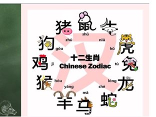 Zodiac by Sophie Wang
