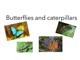 butterflies by Room 207