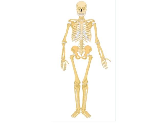 Gemma Skeleton by Mr Parkinson