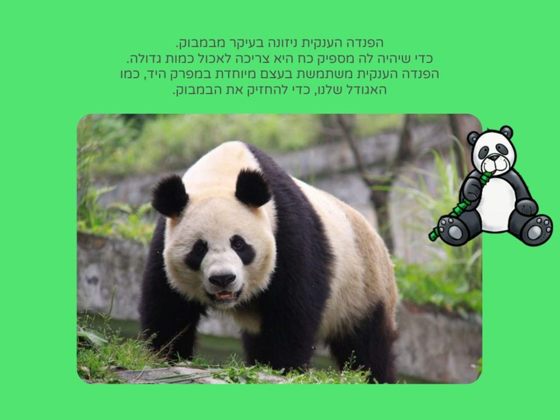 Giant Panda by Esther Hecht