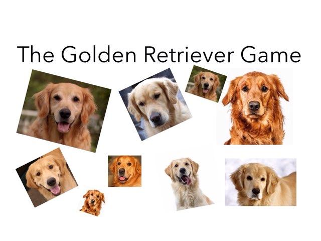 Golden Retrievers by Room 207