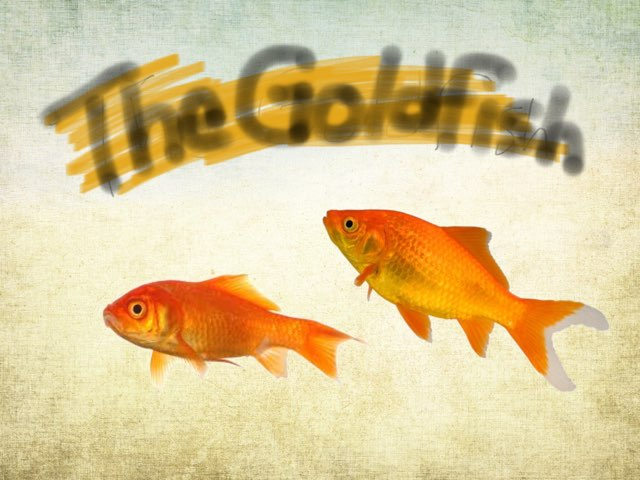 Goldfish Game by KG 115