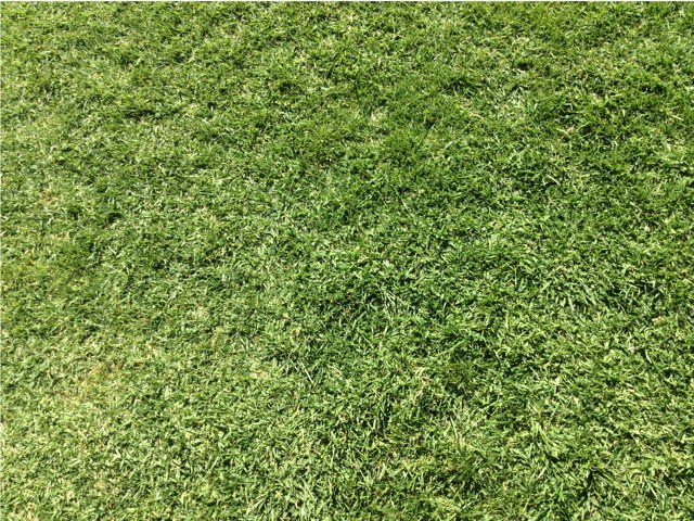 Grass Game by mrs RA