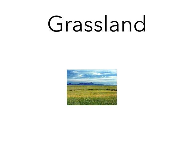 Grassland D.S. by Sarah Bosch