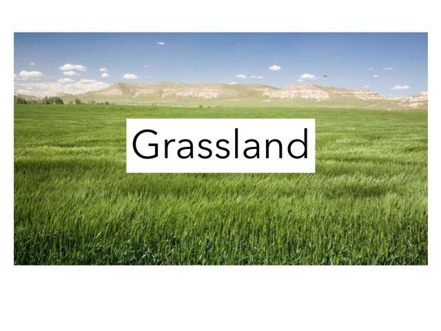 Grassland M.Y. by Sarah Bosch