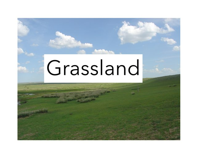 Grassland Th by Sarah Bosch