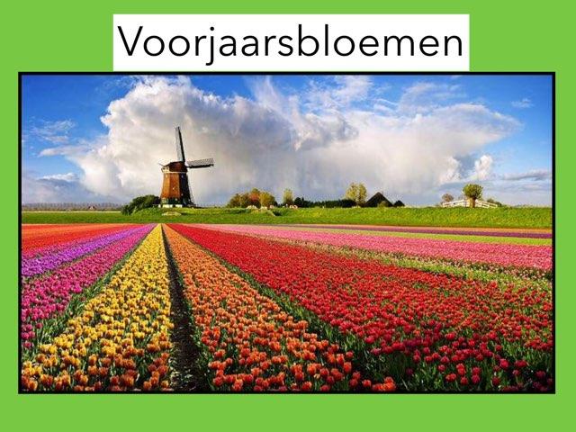 Groep 3 Voorjaarsbloemen by Wieke Jasper