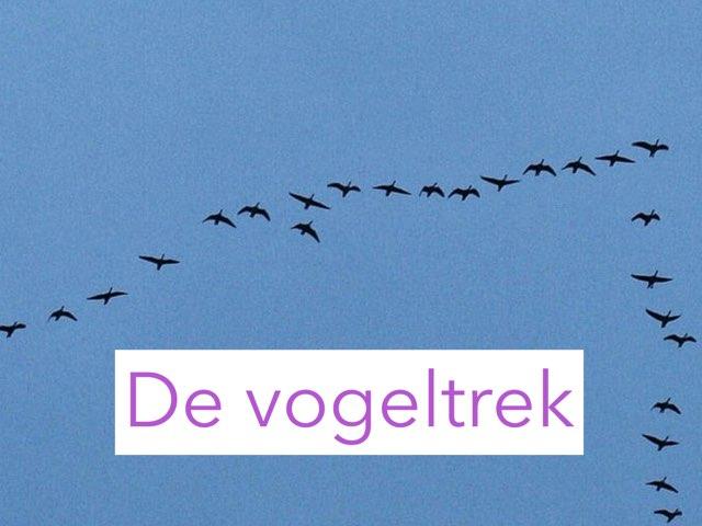 Groep 4 De Vogeltrek by Wieke Jasper