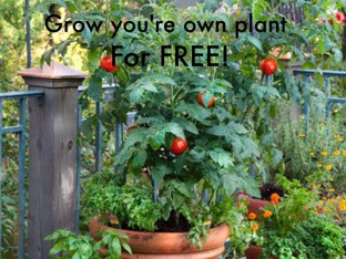 Grow Your Own Plant! by Belinda Job