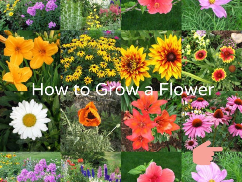 Growing a Flower by Emily Klein