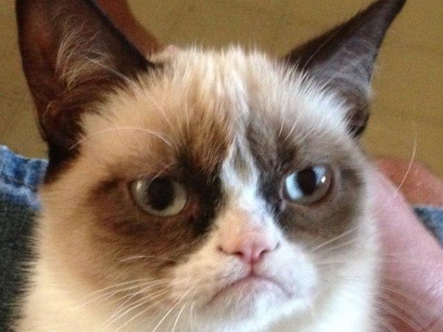 Grumpy Cat  by Lior Goldenberg