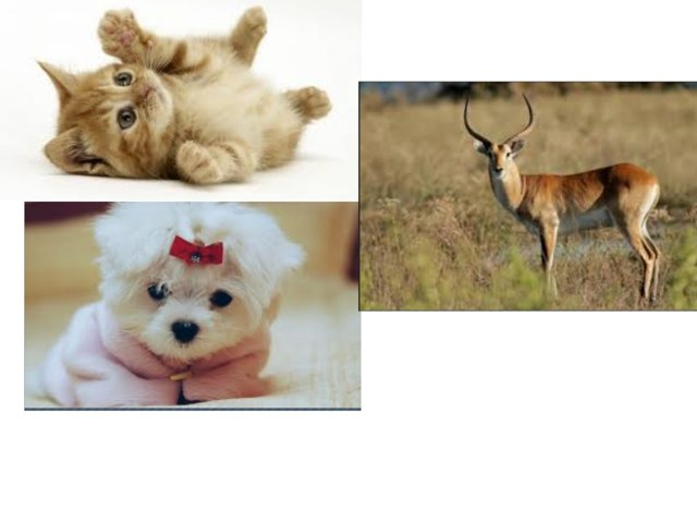 Guess My Animal by CTJ Online