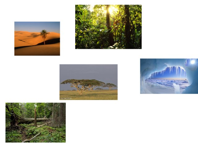 Habitat Review by Kathy Wheeler