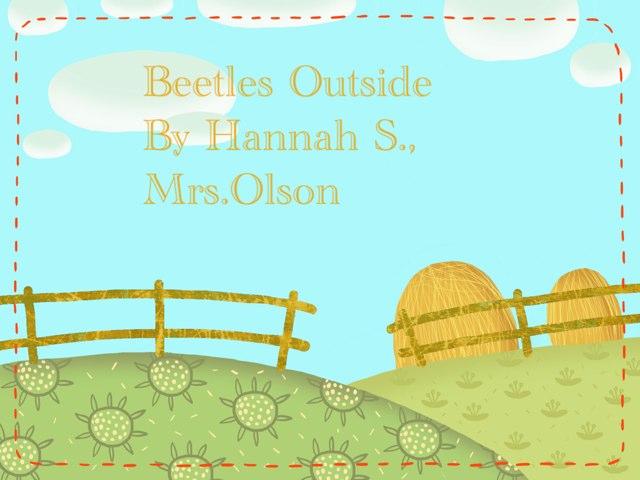 Hannah's Beetle Project by Stephanie Olson