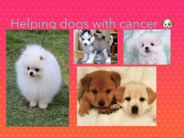 Helping Dogs With Cancer by Coach Nikic