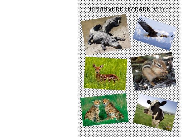 Herbivores & Carnivores  by Katrina Miller