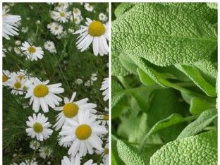 Herbs by Athanasia Papachristou