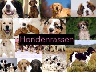 Hondenrassen by Ted van Buuren