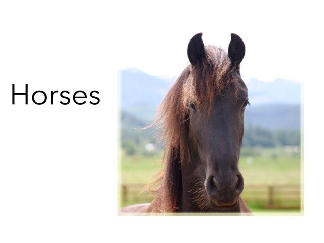 Horses by Kaycee eastman