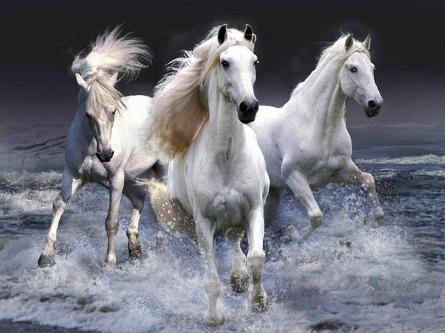 Horses by uri lazar