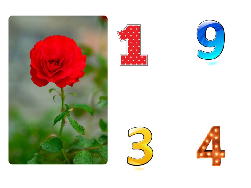 How many ? by waad shrief