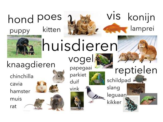 Huisdieren by Miranda Dijkstra