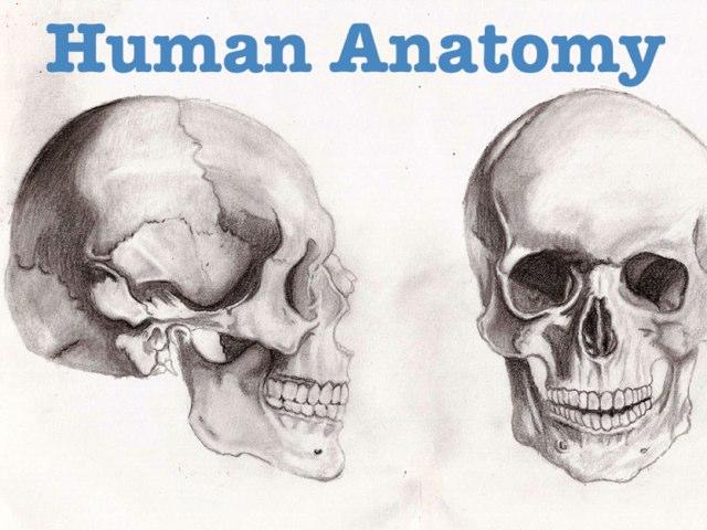 Human Anatomy by uri lazar