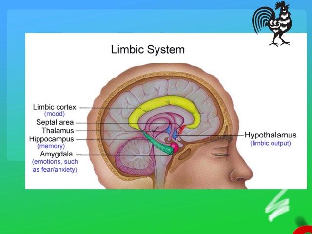 Hypothalamus Game by Bman D.
