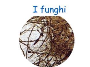 I Funghi  by Miriam gandina