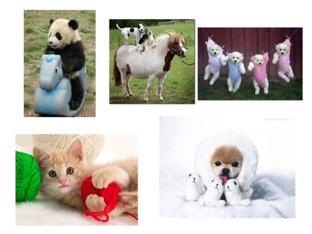 Inglish Animals by Beatriz Rossini