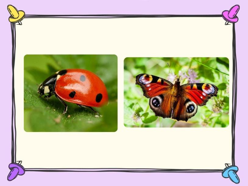 Insecten 2 by Floor Verweij