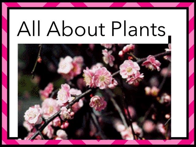 Ivana Plants by Hulstrom 1st Grade
