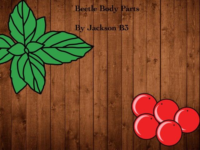 Jackson's Beetle Prol by Vv Henneberg