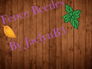 Jaclyn's Beetle Project by Vv Henneberg