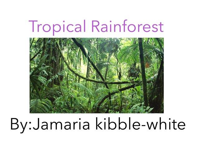 Jamari's Rainforest Work by Sarah Bosch