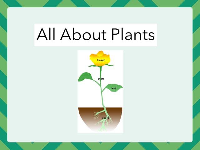 Jayce Plants by Hulstrom 1st Grade