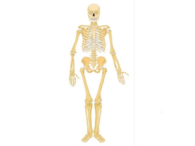 Jessica Skeleton by Mr Parkinson