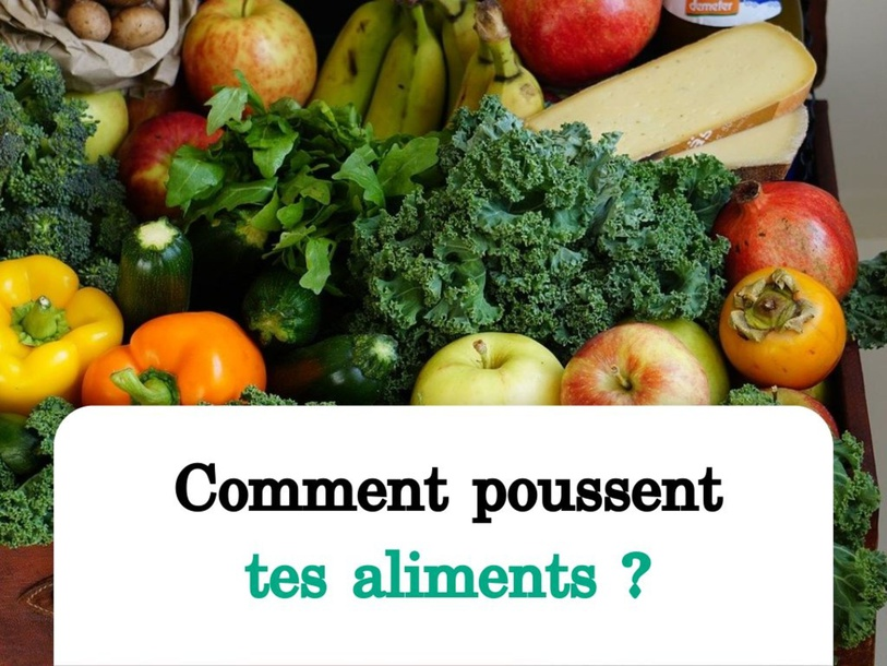 Jeunesse- Comment poussent tes aliments? by SAAC FSAA Université Laval