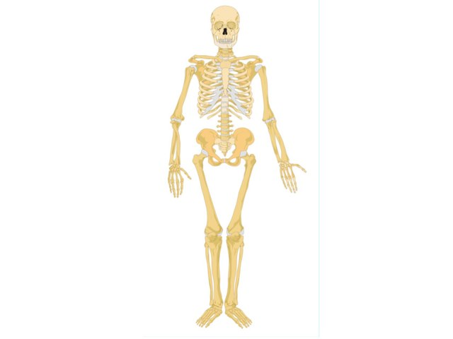 Joe Skeleton by Mr Parkinson
