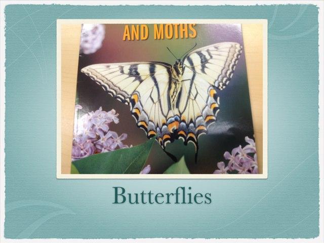 Jorja Butterfly by P302 SAS