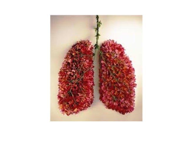 Respiratory system by Daragh Mcmunn