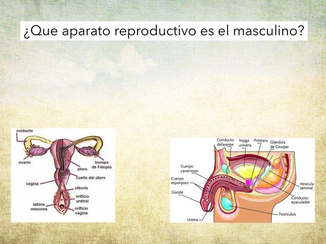 Trata del cuerpo humano y sistemas con el endocrino by Agustin Torres