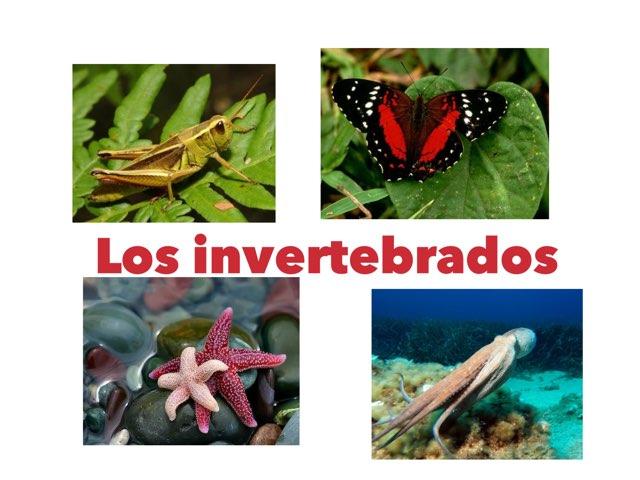 Invertebrados juego by Curso CFTIC