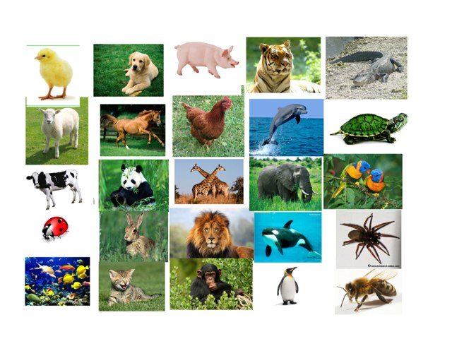 Juego Animales by Carmen Alberto