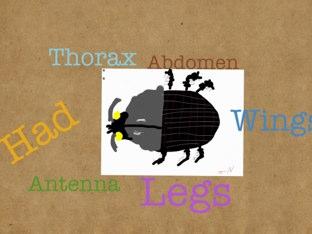 Julia's Beetle Project by Vv Henneberg