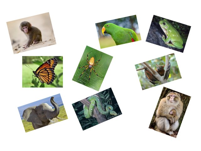 Jungle Animals by Beaufort school