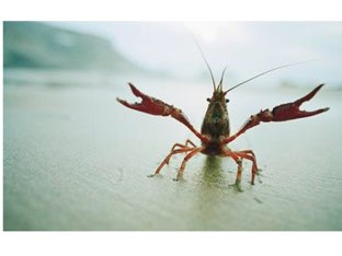 Justin's Crayfish Game by Chris  Smith