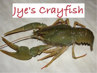 Jye's Crayfish  by Debra  Joyce