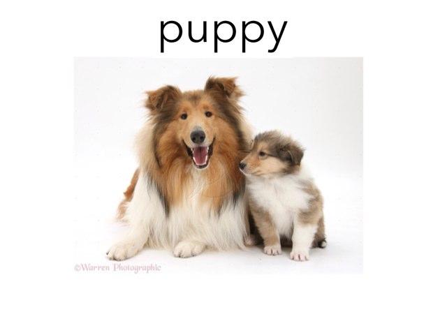 K:  Baby Animals by Frazzled Teacher